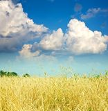 Landscape with cereals field Royalty Free Stock Photo