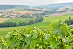 Landscape in Champagne-Ardenne, France Royalty Free Stock Photography