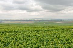 Landscape in Champagne-Ardenne, France Royalty Free Stock Photos