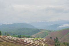 Landscape in chiang mai Royalty Free Stock Photos