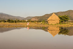 Landscape in chiang mai Royalty Free Stock Images
