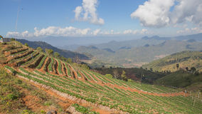 Landscape  in chiang mai Stock Photo
