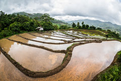 Landscape  in chiang mai Stock Photography