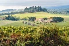 Landscape in Chianti region in province of Siena. Tuscany. Italy. Landscape in Chianti region in province of Siena. Tuscany landscape. Italy royalty free stock photo