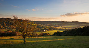 Landscape in the Chilterns at sunset Royalty Free Stock Image