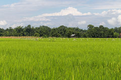 The landscape in  chitwan,Nepal Stock Photos