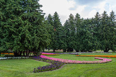 Landscape city park. With flower beds and large pine trees Royalty Free Stock Photo