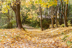 Landscape in the city park in sunny autumn day Royalty Free Stock Images