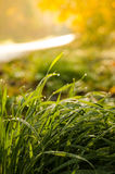Landscape,cityscape,Parks. Morning drops over the grass and sun light behind Stock Images