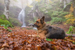 Landscape,cityscape,Parks. Waterfall and a dog near the waterfall Stock Photography