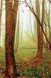 Landscape,cityscape,Parks. Woods in a foggy day and green leaves on the ground Stock Photo