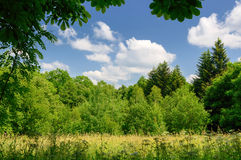 Landscape clearing in a forest Stock Images