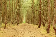 Landscape with a clearing in the protected forest Royalty Free Stock Photography