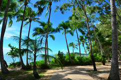 Landscape of Clifton beach near Cairns Queensland Australia. Landscape of Clifton beach near Cairns in Tropical North Queensland, Queensland, Australia stock image