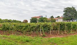 Landscape close to Porec, Crioatia. Royalty Free Stock Images