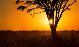 Landscape close-up of orange sunrise through tree Stock Photography