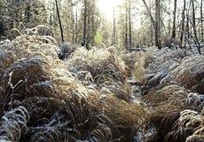Landscape with closeup bush Stock Photos