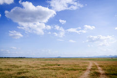 Landscape of cloud and dry field Stock Photography