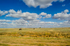 Landscape with clouds and horses in the fiels. Horses on the field in summer, view from the road Stock Photography