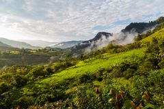 Landscape with clouds, jungles, mountains and crops Andes, Ecuad. Landscape with clouds, jungles, mountains and crops of the northwestern region of the Andes Royalty Free Stock Photo