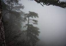Landscape in clouds and mist on Mount Ai Petri in Crimea, Russ. Landscape in clouds and mist on Mount Ai Petri in Crimea in Russia royalty free stock image