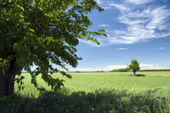 Landscape with clouds and trees. Springlike landscape with white clouds and green grass Royalty Free Stock Photos