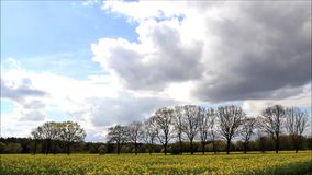 Landscape clouds trees and yellow field in April, Raps stock video footage