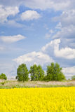Landscape with clouds, trees and a rape field during flowering Stock Photo