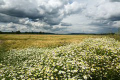 Landscape and cloudy sky Royalty Free Stock Photo