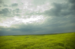 Landscape. cloudy sky. Cloudy sky and green field with wheat stock image
