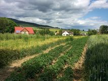 Landscape with cloudy sky. Peaceful rural landscape with cloudy sky. Germany. Europa Royalty Free Stock Photography