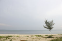 Landscape of cloudy sky and sea which has pine tree on beach Royalty Free Stock Images