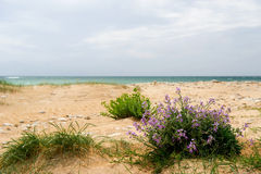 Coast island Oleron. Landscape from coast island Oleron with wild flowers stock photography