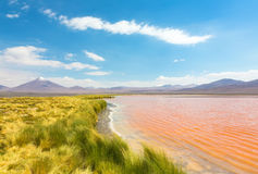 Landscape of the coast lake Laguna Colorada Royalty Free Stock Photos