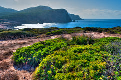Landscape of coast of Sardinia - Gulf of porticciolo. Landscape of coast of Sardinia with green grass in foreground and sea in background Royalty Free Stock Photo