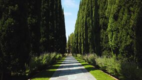 Landscape of cobble stone pathway with trees