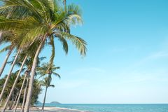 Landscape of coconut palm tree on tropical beach royalty free stock images