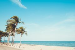 Landscape of coconut palm tree on tropical beach stock photography