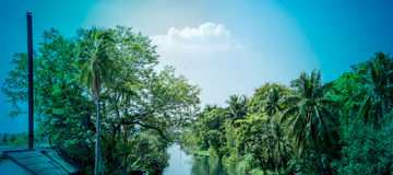 Landscape coconut trees with canal Royalty Free Stock Image