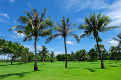 Landscape of coconut trees on a green lawn Stock Photos