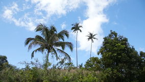 Landscape with coconut trees and mountains stock video footage