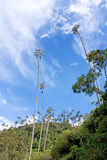 Landscape in the Cocora Valley with wax palm, between the mounta Stock Photo