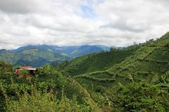 Landscape of coffee and banana plants in the coffee growing region near El Jardin, Antioquia, Colombia stock images