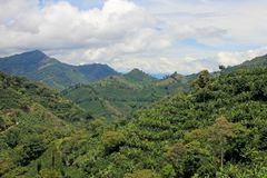 Landscape of coffee and banana plants in the coffee growing region near El Jardin, Antioquia, Colombia stock photo