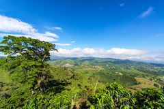 Landscape of Coffee royalty free stock photo