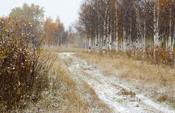 Landscape cold autumn day  . Royalty Free Stock Photography