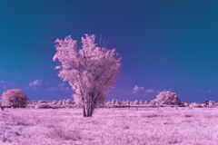 Landscape colored infrared light Royalty Free Stock Photos