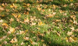 Landscape of colorful fall leaves on forest floor Royalty Free Stock Photography