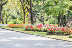 Landscape of colorful flowers blooming in the park. Stock Photo