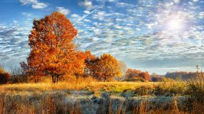 Landscape of colorful frosty autumn nature on sunny day. Fall background stock photo
